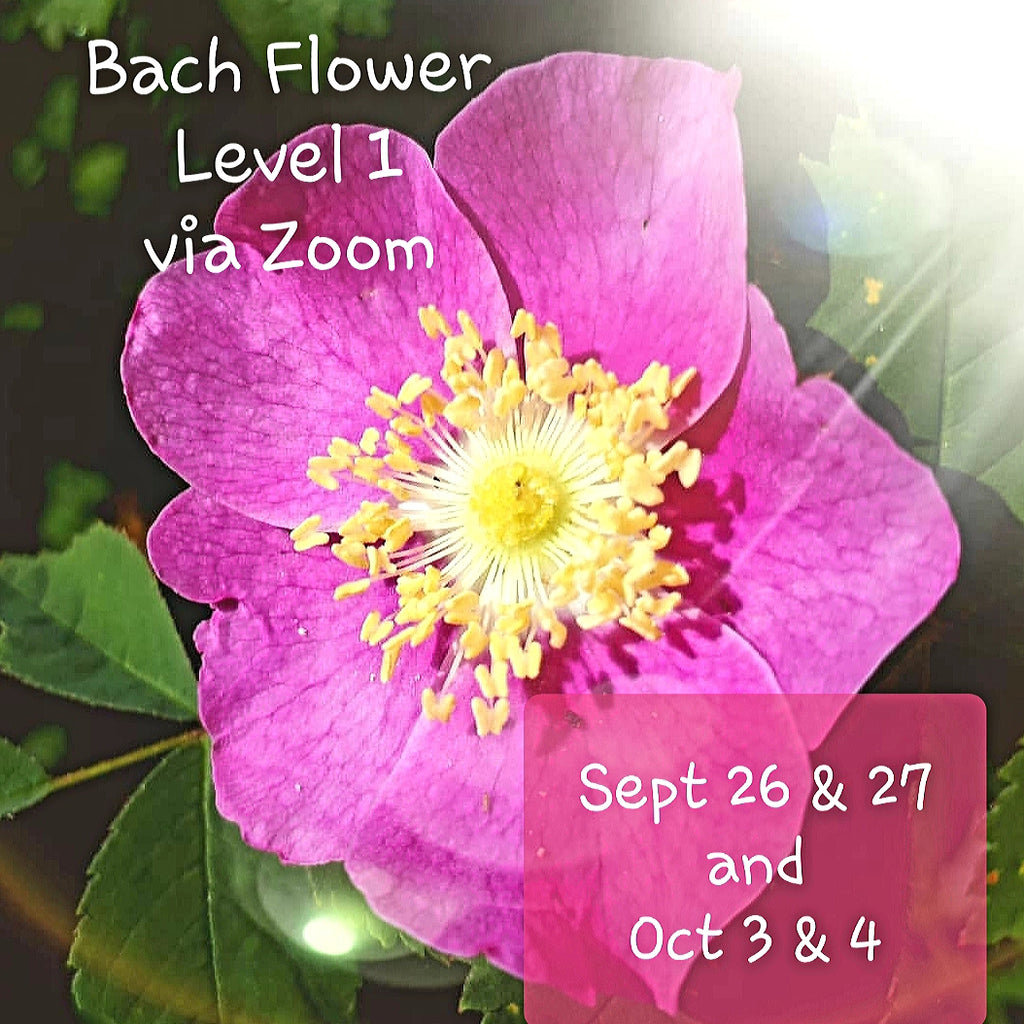 Level 1 Bach Flower Course ~ Live via Zoom ~ Fall 2020