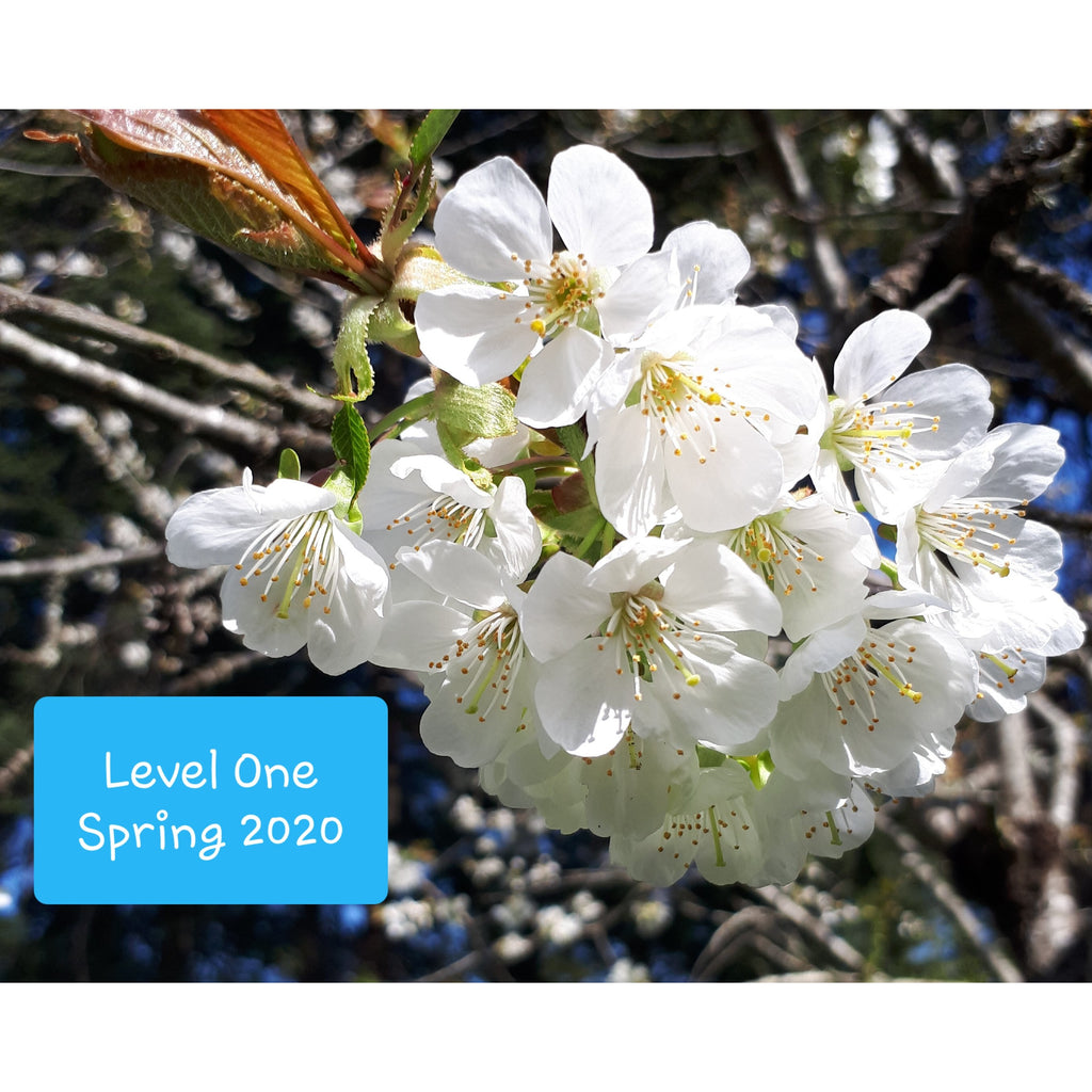 Level One Introductory Bach Flower Course ~ Comox, BC ~ Spring 2020