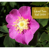 Level Two Advanced Bach Flower Course - Courtenay, BC ~ Fall 2020