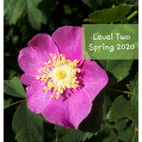 Level Two Advanced Bach Flower Course - Courtenay, BC ~ Spring 2020