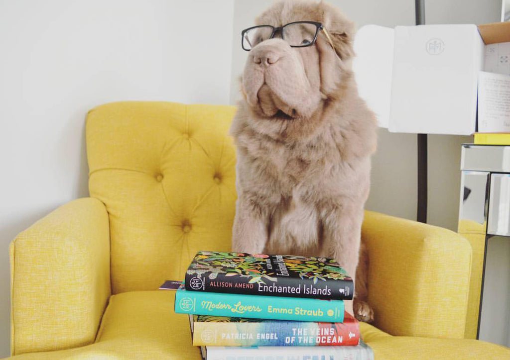 Top Doggy Instagram Accounts to get you Through Monday