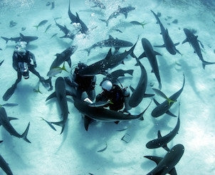 Bahamas Shark Diving Experience