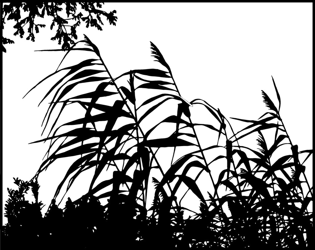 Wind in the Reeds