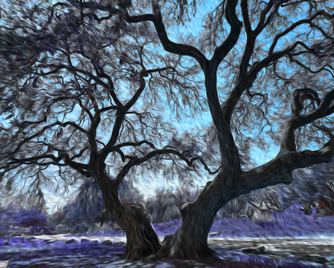 Blanco River Tree Blue - ArtLifting