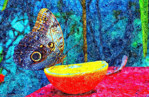Butterfly on Orange - ArtLifting