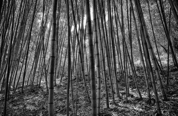 Bamboo Forest - ArtLifting