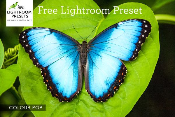 Free Lightroom Preset | Close-Up Colour Pop