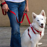 Walk In Sync™ Harness and Leash