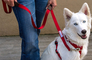 Walk In Sync Harness and Leash set
