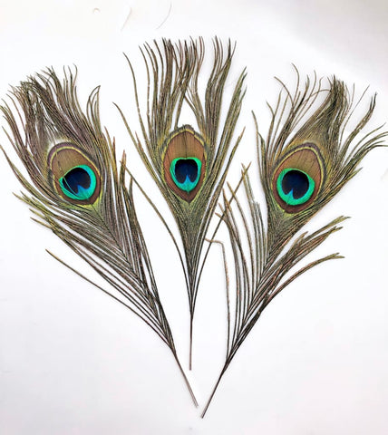 Peacock Feather - Smudge Feather - Energy Clearing - Smudging - Feather - size 9-12