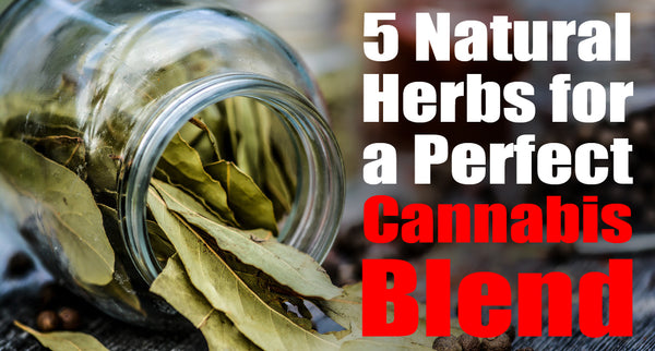 5 Natural Herbs for a Perfect Cannabis Blend