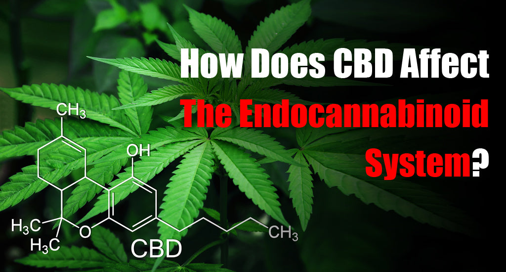 How Does CBD Affect The Endocannabinoid System