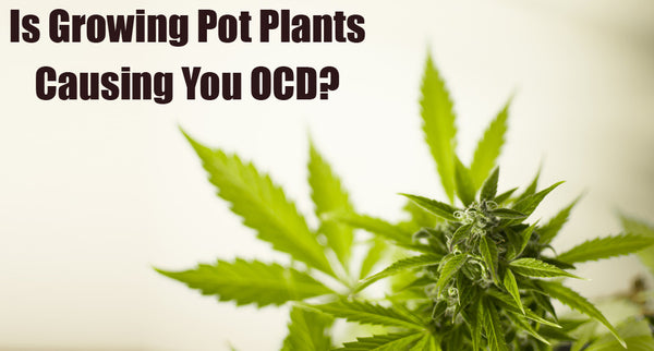 Is Growing Pot Plants Causing You OCD?