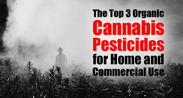 The Top 3 Organic Cannabis Pesticides for Home and Commercial Use