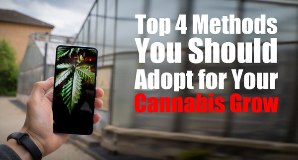 Top 4 Methods You Should Adopt for Your Cannabis Grow in 2021