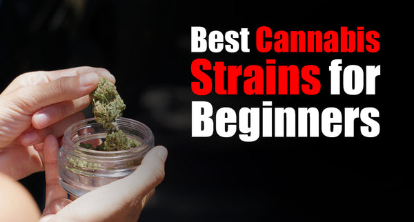 Best Cannabis Strains for Beginners