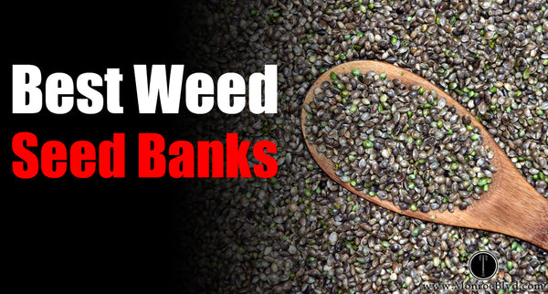 Best Marijuana Seed Banks