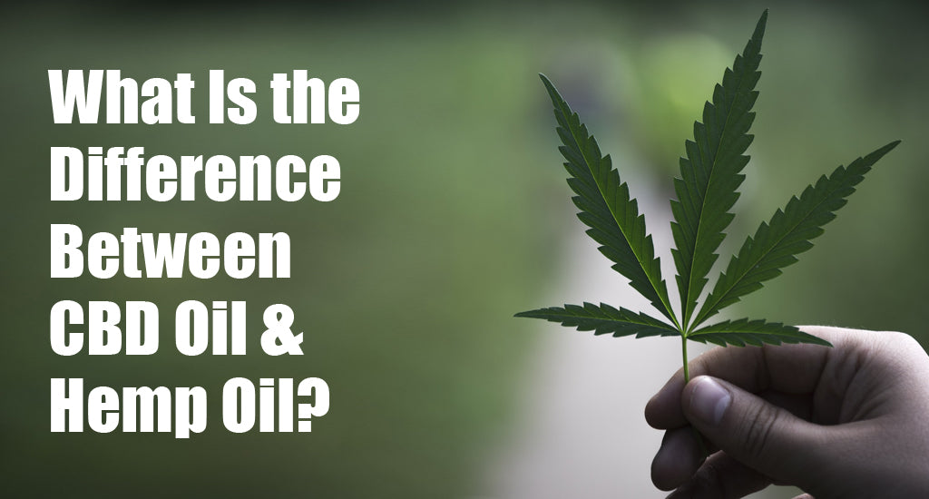 between-cbd-oil-and-hemp-oil