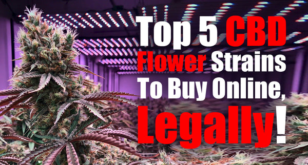 Top 5 CBD Flower Strains To Buy Online, Legally!