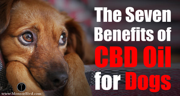 The Seven Benefits of CBD Oil for Dogs
