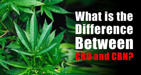 What is the Difference Between CBD and CBN?