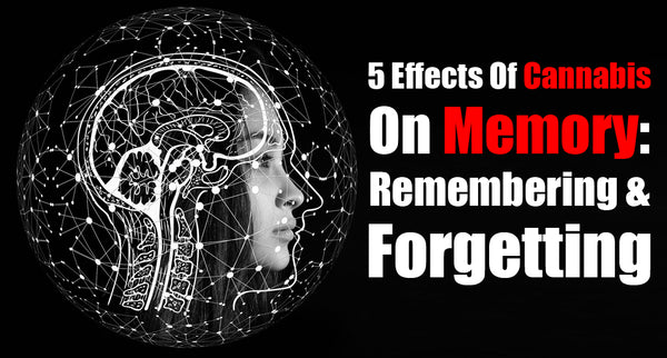 5 Effects Of Cannabis On Memory: Remembering & Forgetting