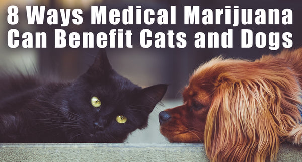 8 Amazing Benefits of Marijuana for Dogs and Cats