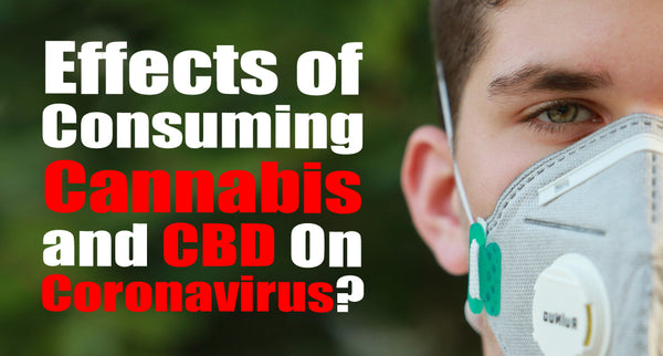 Effects of Consuming Cannabis and CBD On Coronavirus?