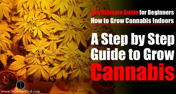 A Step by Step Guide to Grow Weed Indoors for Beginners