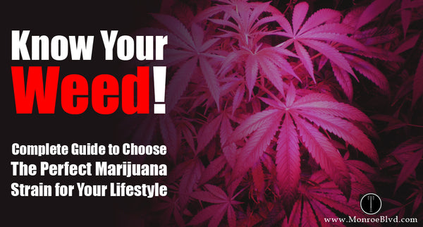 Know Your Weed! Complete Guide to Choose The Perfect Marijuana Strain for Your Lifestyle