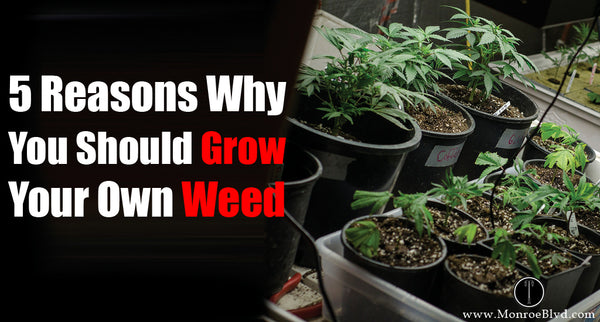 5 Reasons Why You Should Grow Your Own Weed