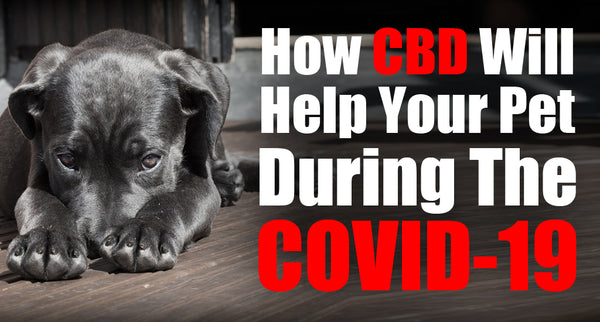 How CBD Will Help Your Pet During The COVID-19