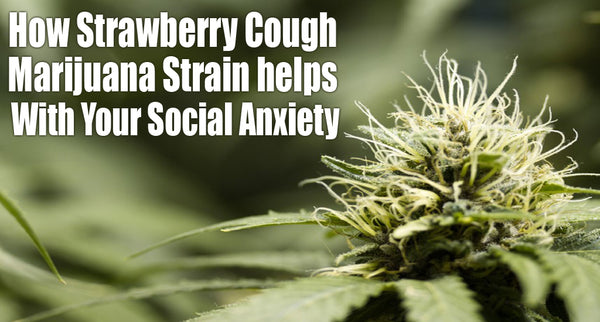 How Strawberry Cough Marijuana Strain helps in Social Anxiety