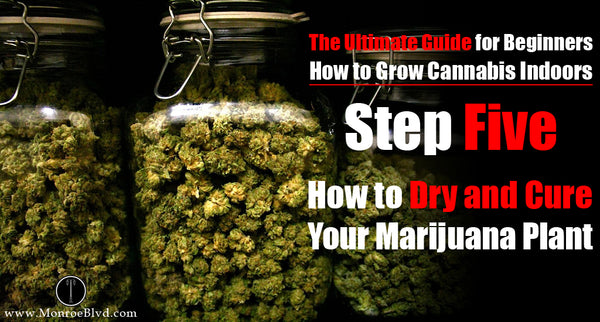 Step Five: How to Dry and Cure Your Marijuana Plant