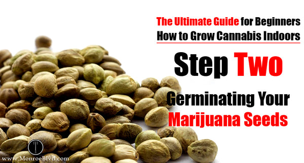 Step Two: Germinating Marijuana Seeds and The Seedling Stage