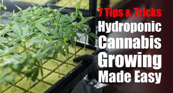 Hydroponic Cannabis Growing Made Easy