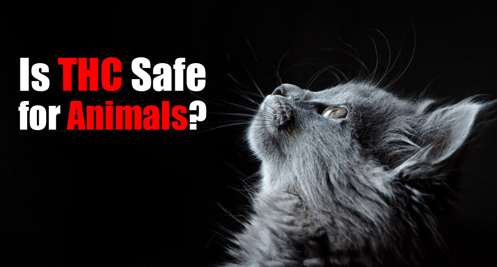 is-thc-safe-for-animals