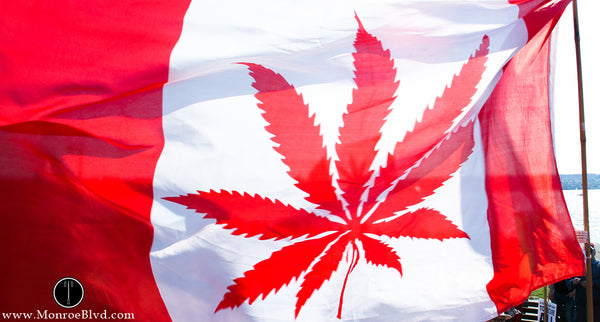 A Serious Look At Legalizing The Use Of Cannabis In Canada
