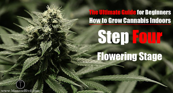 Step Four: The Flowering Stage - how to build a small grow room