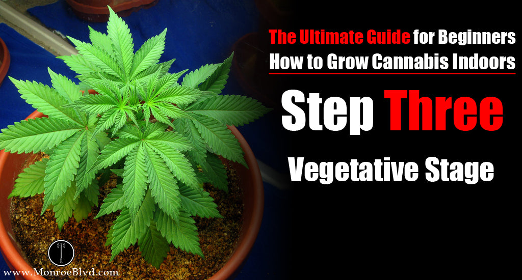 marijuana-vegetative-stage-cannabis-growth-control-vegetative-stage-the-vegetative-stage-of-the-cannabis-plants