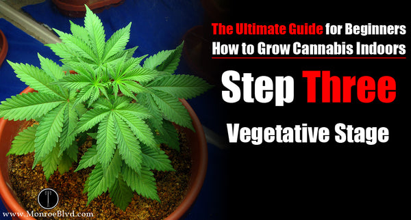 Step three: Marijuana Vegetative Stage - For Indoor Growing