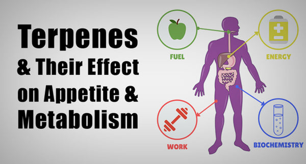 Terpenes and Their Effect on Appetite and Metabolism