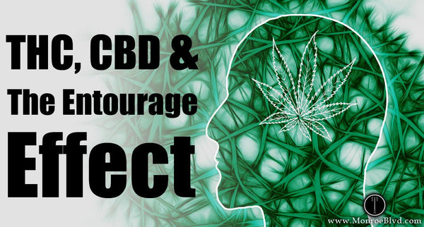 THC and CBD, and the Entourage Effect!