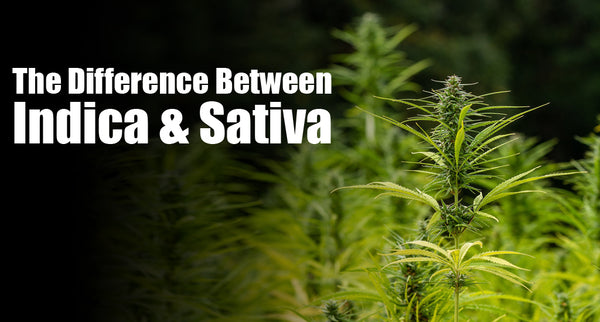 The difference between Indica and Sativa?