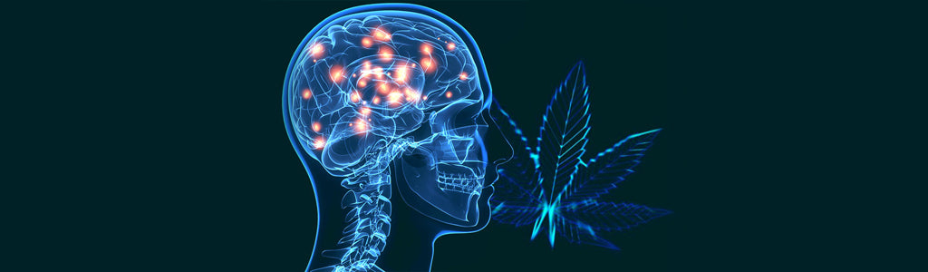 5-benefits-of-cannabis-for-parkinson