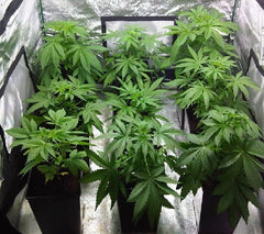 building-the-perfect-indoor-grow-room & Step One: How to Build the Perfect Indoor Grow Room (For up to 6 ...