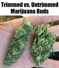 how to trim untrimmed