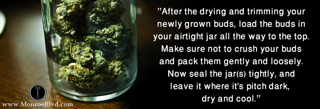 marijuana-in-jar-how-to-dry-and-cure-your-marijuana-plant-cannabis-plant-curing-weed-dry-cannabis