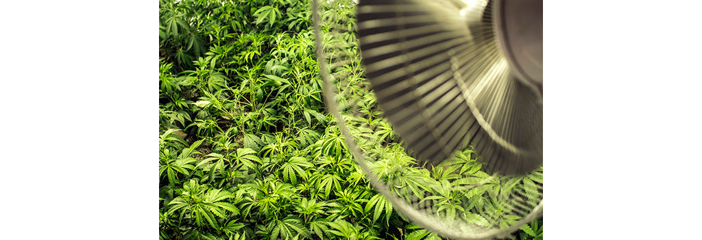 marijuana-vegetative-stage-fan-to-circulate-cannabis-grow-room