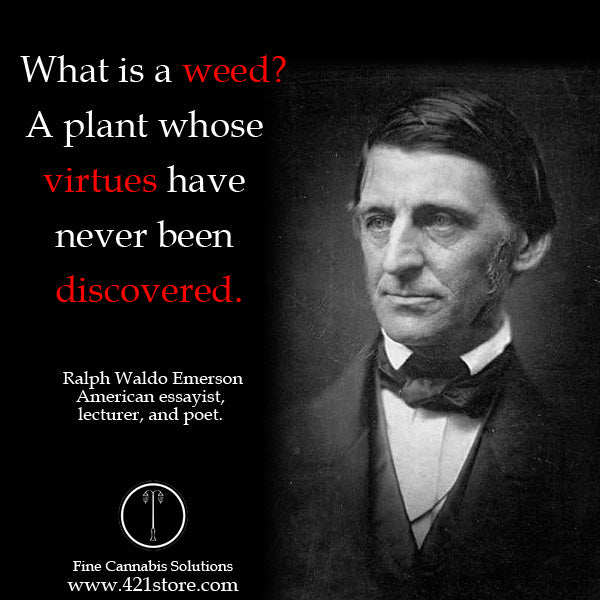 famous-stoner-quotes-about-life-marijuana-quotes-cannabis-quotes-ralph-emerson